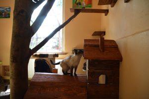 Innenaufnahmen des neuen Katzenhauses