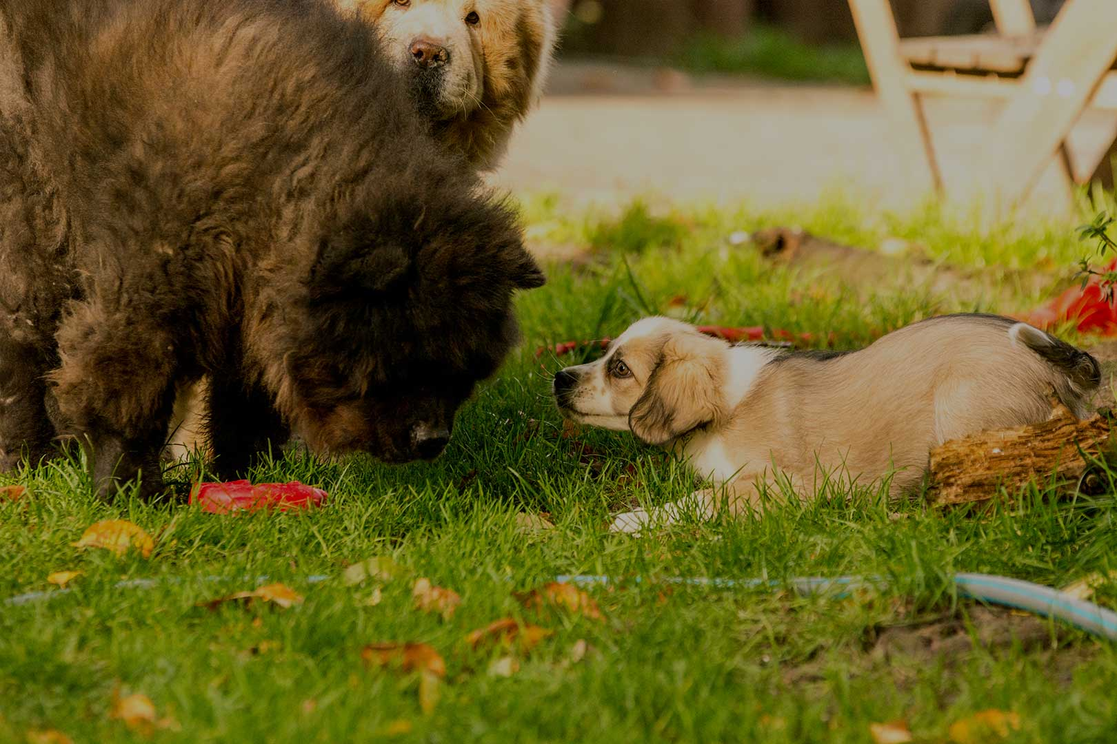 Hunde-spielen1620X1080_opa30